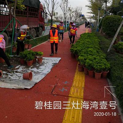 金湾三灶碧桂园海湾壹号绿化改造工程
