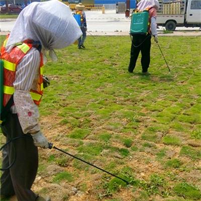 草坪专用药剂除杂草及冬季树干涂白工程